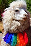 Alpaca with a Colorful Scarf Animal Journal: 150 Page Lined Notebook/Diary
