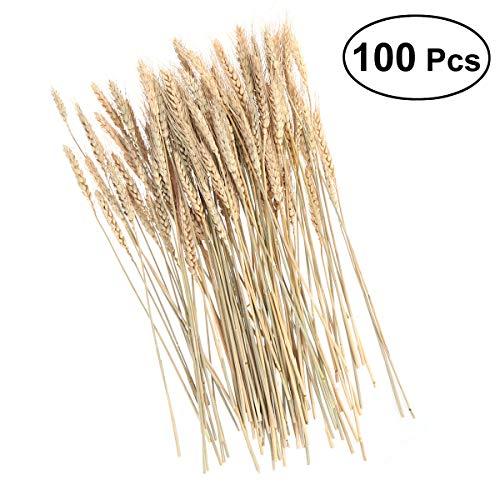 Supvox 100 pezzi secchi di grano bundle naturale stelo fiore disposizione decorazioni per la casa ufficio di nozze