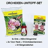 Orquídeas umtopf Set, plantas