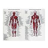 Uniqus muscolare sistema manifesti Silk Cloth Picture corpo umano anatomico chart scienza medica piede educativo-didattico testa sanitario