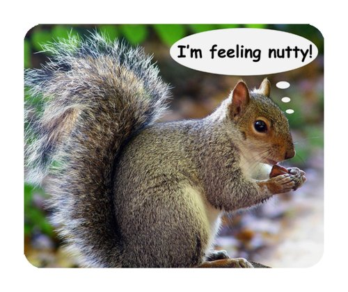 grey-squirrel-mouse-mat-wildlife-im-feeling-nutty