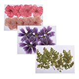 Dolity 30 Unidades de Flores Prensadas Atractivos Adecuado para Fabricación de Papel de Arte