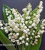 100 Stück Maiglöckchen Blumensamen, Glocke Orchidee Samen, reiches Aroma, Bonsai-Blumensamen, so niedlich und schön