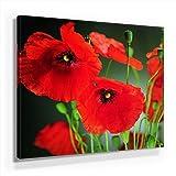 Mohnblumen Bild B480, 1 Teil 80x80cm Leinwand auf Holzrahmen aufgespannt, FineArt Print, UV-stabil und wasserfest, Kunstdruck für Büro oder Wohnzimmer, Deko Bild