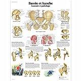 3B Scientific Planche Anatomique Bassin et Hanche Anatomie et Pathologie plastifié