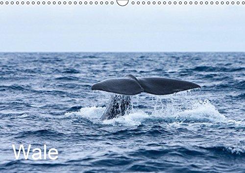 Wale (Wandkalender 2019 DIN A3 quer): Ein Kalender mit Bildern der größten Tiere unseres Planeten, aufgenommen vor den Azoren und im Nordatlantik. (Monatskalender, 14 Seiten ) (CALVENDO Orte)