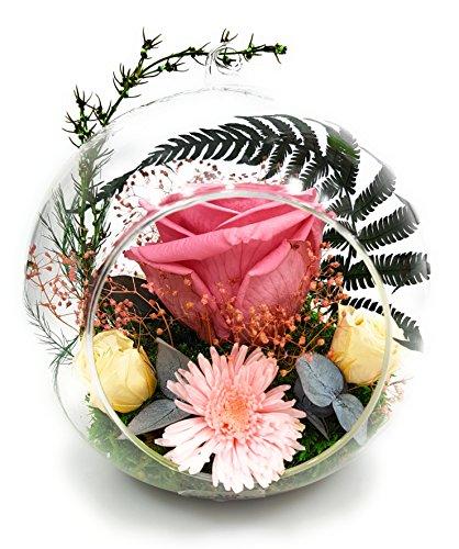 Rosen-te-amo Konservierte-RosenBlumen-Gesteck aus ECHTE Blumen in der Vase, PREMIUM haltbare-Rosen-unser EXKLUSIVES Blumen-Arrangement sind lange haltbar,handgemacht (Mehrfarbig-Cherry-Champange-Rosa)