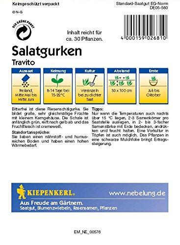 Gurkensamen – Salatgurke Travito von Kiepenkerl