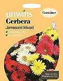 Unwins bebildertes P ckchen Gerbera Jamesonii gemischt, 50 Samen