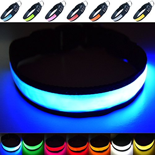Fun Pets Hundesicherheitshalsband mit ultraheller, wiederaufladbarer LED mit hervorragender Sichtbarkeit und erhöhter Sicherheit Groß (50cm - 60cm / 19.7