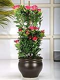#6: Planters Premium Range Artificial Morning Glory Plant with Stylish Ceramic Vase