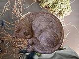 Katzenurne aus Keramik, veredelt mit Seidenpapier, grau, Vol. ca. 0,70 Ltr.