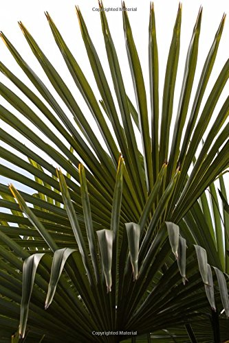 Fan Palm Tree Leaves Nature Journal: 150 Page Lined Notebook/Diary (Tree Leaf Palm)