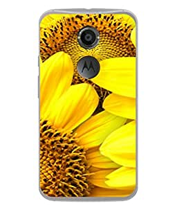 Fuson Designer Back Case Cover for Motorola Nexus 6 :: Motorola Nexus X :: Motorola Moto X Pro :: Google Nexus 6 (Garden Sunflower Multiple Yellow Lady Dussehra)