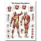 JXFFF Stampa HD Mappa del Corpo Immagini a Parete Anatomia Umana Muscoli Sistema Arte Pittura su Tela Poster per educazione Medica Decorazioni per la casa 50x70cm Senza Cornice