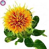 Prezzo basso! 50 pc / lotto di semi di cartamo fiore rosso in vaso bonsai per la casa e il giardino medicinale perenne erba impianto freeshipping