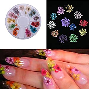 Buy Ast Works 36pcs Nail Dried Flowers Nail Art Decoration Diy Tips