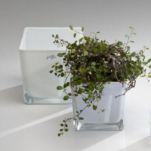Würfel Glas farbig Blumentopf Übertopf Blumenübertopf weiß 12 cm