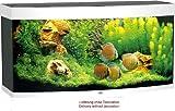 baumarkt direkt Aquarium »Vision 260« 260 l, weiß