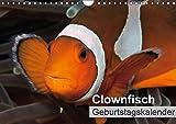 Clownfisch Geburtstagskalender (Wandkalender immerwährend DIN A4 quer): Soll ich mich verstecken oder nicht? Clownfische vor der Kamera ... Tiere [Kalender] [Mar 28, 2015] Gruse, Sven
