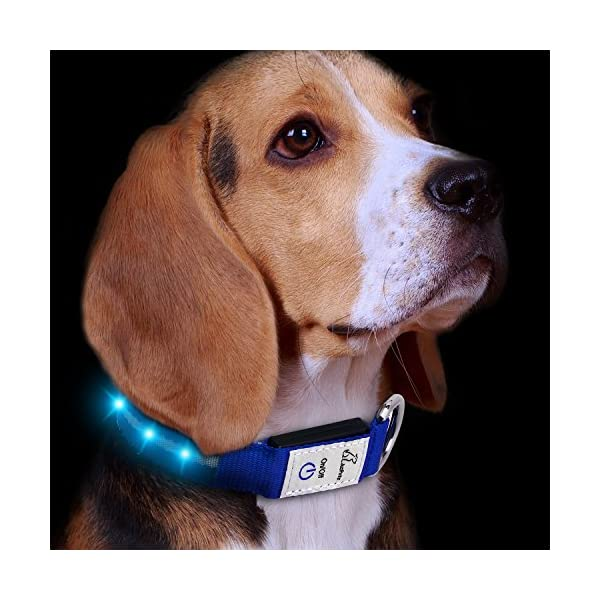 JuzPetz Rechargeable LED Dog Collar, Reflective Flashing Visible Collar [Water Resistant | 3 Glow Modes] Adjustable Light-Up Pet Safety Collar with USB Charging Cable 1