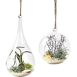 Mkouo Lot de 2 Vase Suspendu de Verre Boule Pour Fleur Décoration Pots à suspendre Air Plante Terrariums de Jardin Maison Mariage