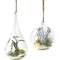 Mkouo 2 unidades para colgar maceta de depósito de jarrón de cristal del terrario Flor Maceta Decoración del hogar -- ORB y lágrima