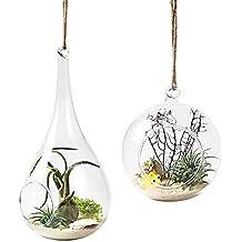 Mkouo 2 unidades para colgar maceta de depósito de jarrón de cristal del terrario Flor Maceta