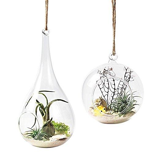 Mkono terrari, confezione da 2, con vaso in vetro floreale-Vaso per piante in vaso o contenitore Decoration--Orb Home a forma di goccia