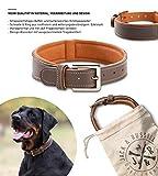 Jack & Russell Halsband Amy - Premium Leder Hunde Halsband echtes Leder Halsband braun Amy (L)