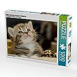 Süßes Britisch Kurzhaar Kätzchen 1000 Teile Puzzle quer