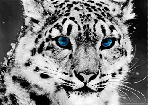 DIY Diamant Gemälde malen nach Zahlen Kits für Erwachsene,diamant painting bilder voll Niedliche Leopard Full Drill Strass Stickerei Kreuzstich Supply Kunst Basteln Leinwand Wand Deko 40x30cm Leopard-diamant