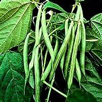 """Portal Cool Alubias azules de Lake Bush!30 semillas - 6""""de largo!Mejor para el peine de conservas. S/H"""