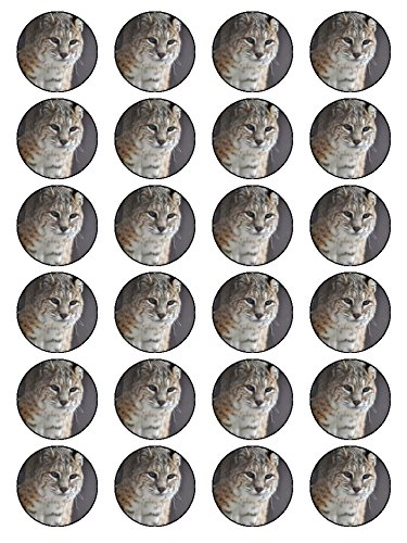 x24-15-inch-bobcat-animal-birthday-cup-cake-toppers-decorations-on-edible-rice-paper