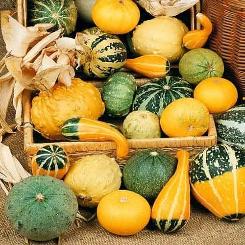 Beautytalk-Garten 20 Stück Zierkürbisse - gross und klein Kürbis Saat gelber Zentner Selten Bunte Pumpkin Samemn Gemüse garten Cinderella Kürbis