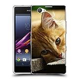 Just Phone Cases Schutz Hülle TPU Case Schutzhülle Silikon Tasche Dünn Transparent // V00004287 Katze liegend auf Holzbrettern // Sony Xperia Z1 Compact D5503