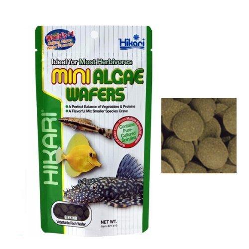 Hikari Mini Algen-Tabs, Futtermittel für Lecostomus, Ancistrus und andere Fische -