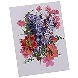 Baoblaze Echte Blumen - gepresst und getrocknet - Multi2, 1-2.8cm