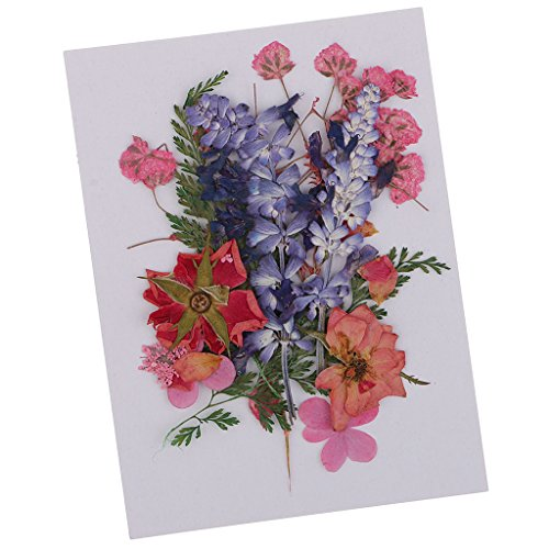 Baoblaze Echte Blumen - gepresst und getrocknet - Multi2, 1-2.8cm (Gepresstes Blatt)