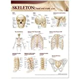 Lippincott Williams & Wilkins Atlas of Anatomy Skeletal System Chart: Head and Trunk
