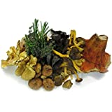 Turnips Mushrooms Wild Foraged Mix (4-6 Varieties)