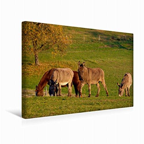 Premium Textil-Leinwand 45 cm x 30 cm quer Esel und Pferd beim Grasen | Wandbild, Bild auf Keilrahmen, Fertigbild auf echter Leinwand, Leinwanddruck