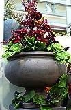 Flower Style Deko Schale Cemento, 71 x 56 cm, Grau
