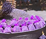 Enstpannung-Shop 10x Lavendelsäckchen - Insgesamt 100g Lavendel Duftsäckchen gegen Motten und für Kleiderschränke
