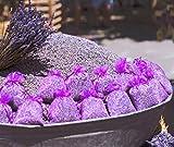 Enstpannung-Shop 10x Lavendelsäckchen - Insgesamt 100g Lavendel Duftsäckchen gegen Motten