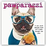 Pawparazzi 2020 - 16-Monatskalender: Original Graphique de France-Kalender [Mehrsprachig] [Kalender] (Wall-Kalender)