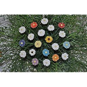 20 Keramikblumen: Gänseblümchen – bunt, ca. 2,5 cm von SylBer-Ceramics aus Markkleeberg