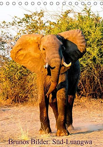 Brunos Bilder: Süd-Luangwa (Tischkalender 2020 DIN A5 hoch): Außergewöhnliche Fotos aus einem wildreichen Nationalpark in Sambia. (Monatskalender, 14 Seiten ) (CALVENDO Tiere)