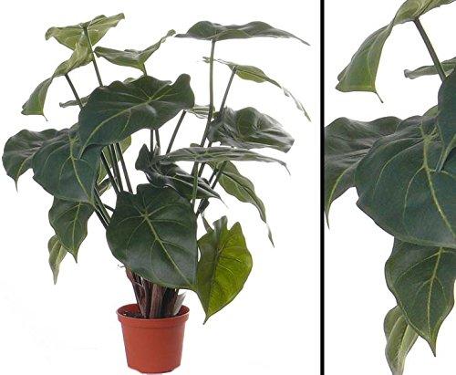 Künstliche Purpurtute Syngonium podophyllum mit 20 Blätter, Höhe von 45cm im Topf - Kunstpflanze künstliche Blumen Kunstblumen Blumensträuße künstlich, Seidenblumen oder Blumen aus Plastik Kunststoff --> großes Kunstblumen Sortiment
