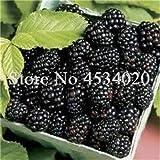 SANHOC Le Piante di gelso Bonsai Dolce Black Berry giganti Miracolo Frutta pianta Tohum Rare Albero Bonsai Garden Bush Giardino Domestico di DIY 100 Pz: 10
